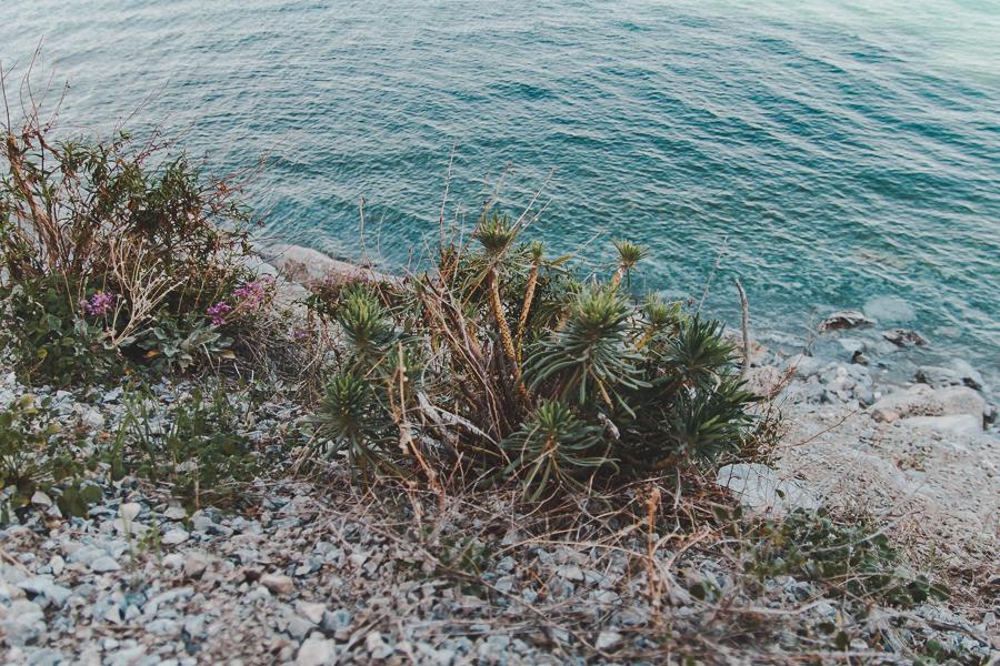 Śródziemnomorska roślinność