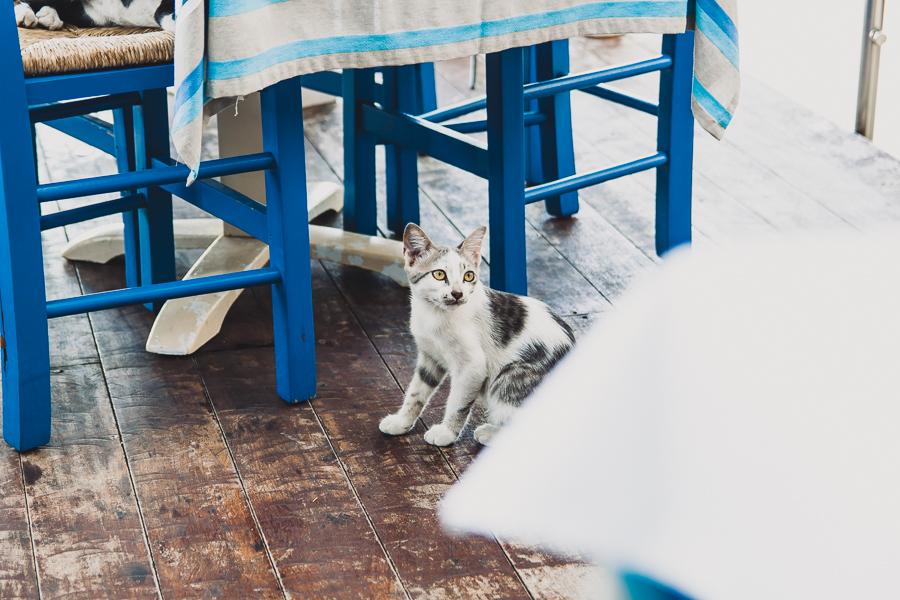 Koci towarzysze