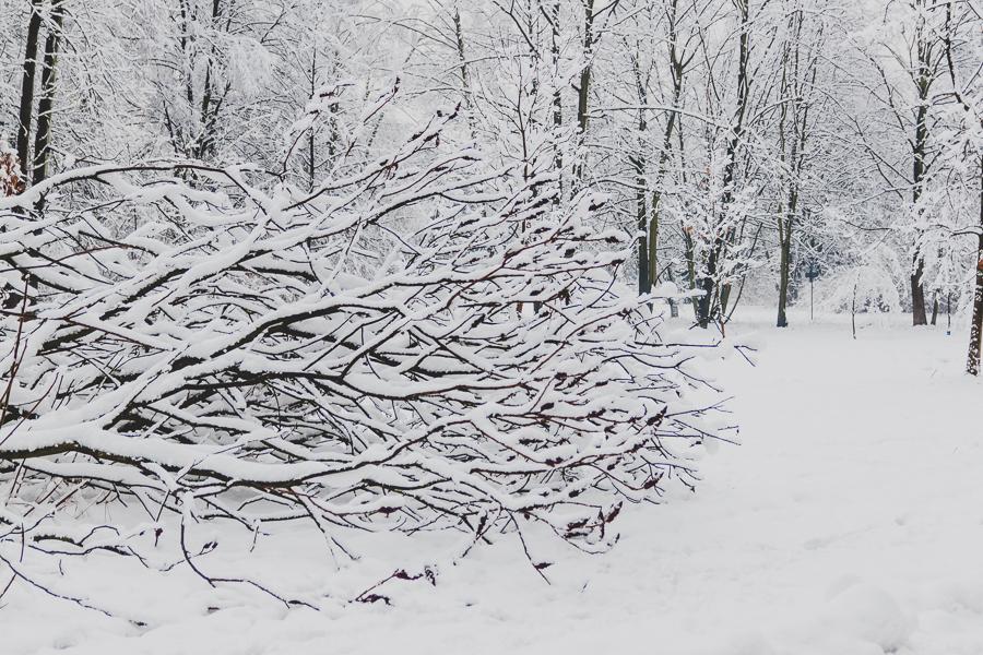 Park w śniegu