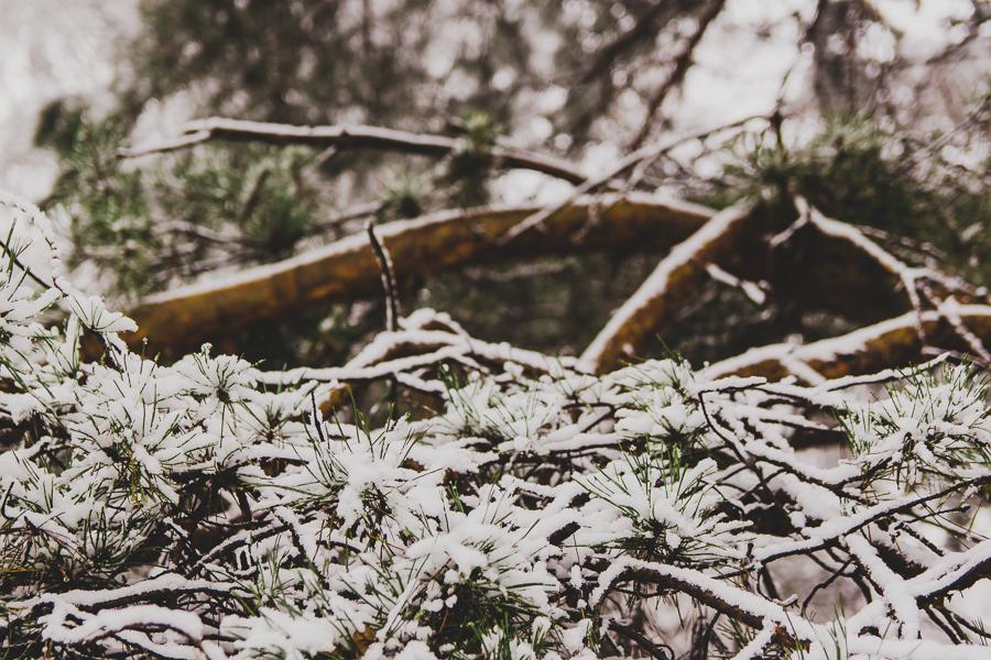 Zimowa choinka