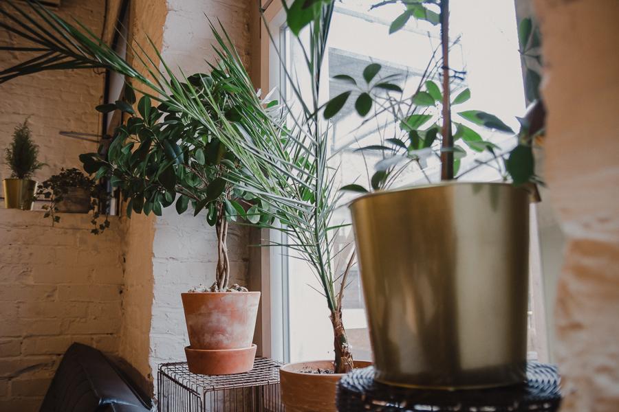 Roślinność w Zelterze