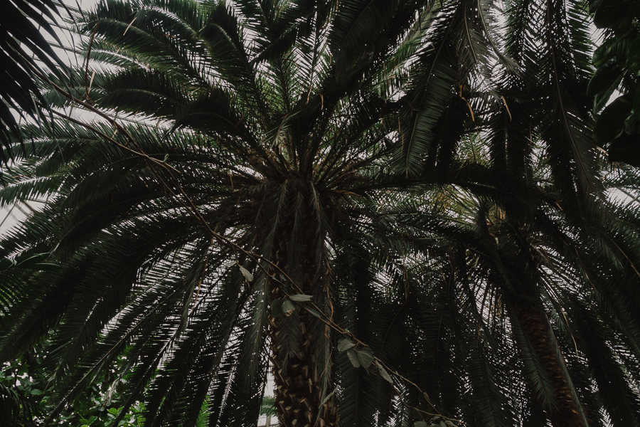 Gliwicka Palmiarnia