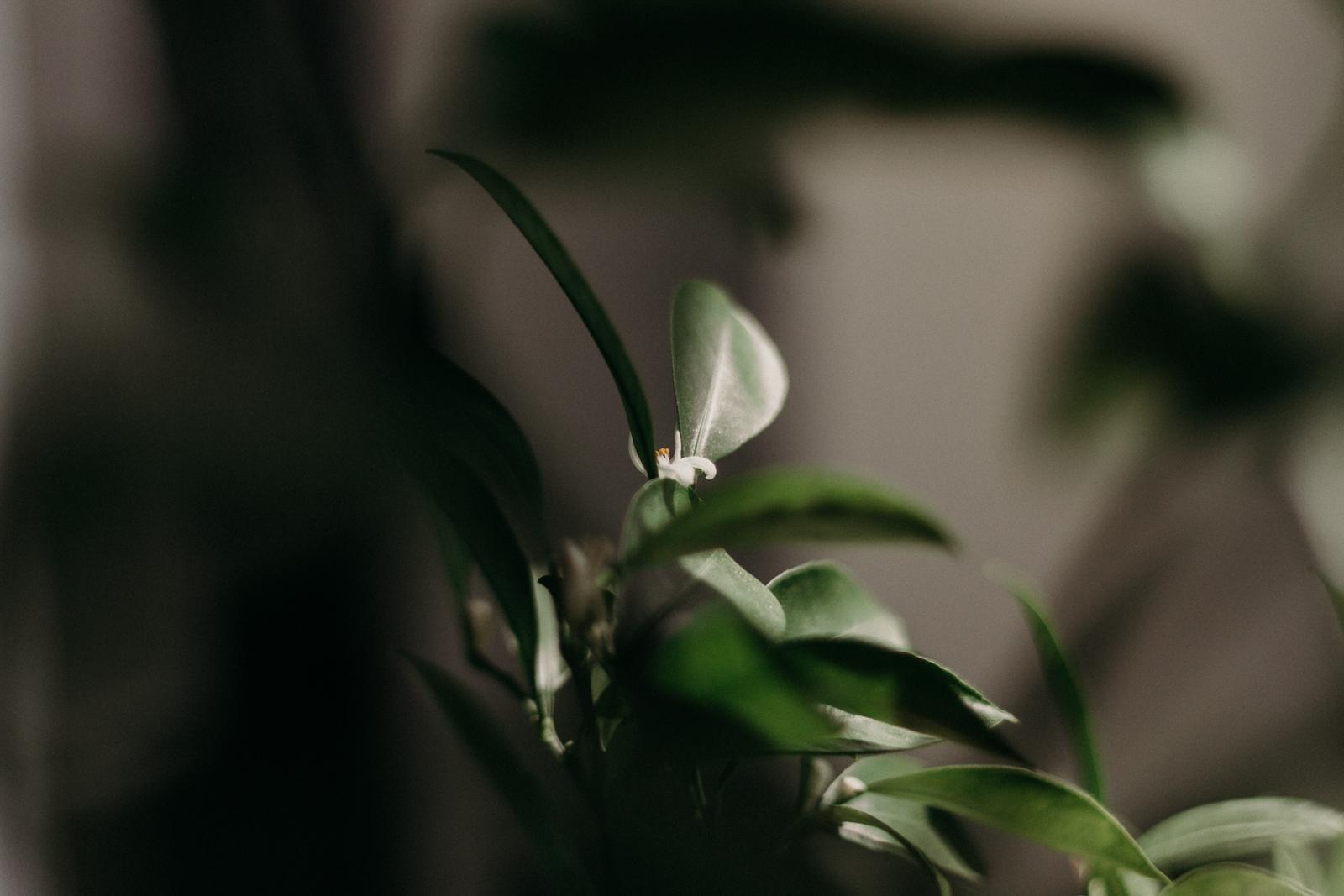 Wiosenna pobudka